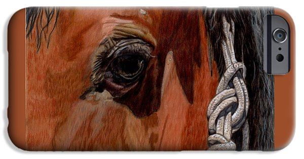 Drawing Of A Horse iPhone Cases - Here is Looking at You iPhone Case by Gail Seufferlein