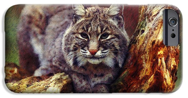 Bobcats Digital iPhone Cases - Here Kitty Kitty iPhone Case by Lianne Schneider