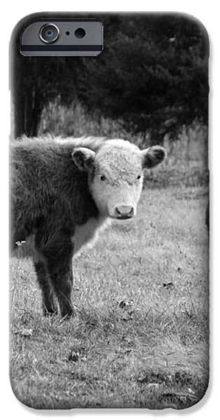 Hereford Portrait V in Black and White iPhone Case by Suzanne Gaff