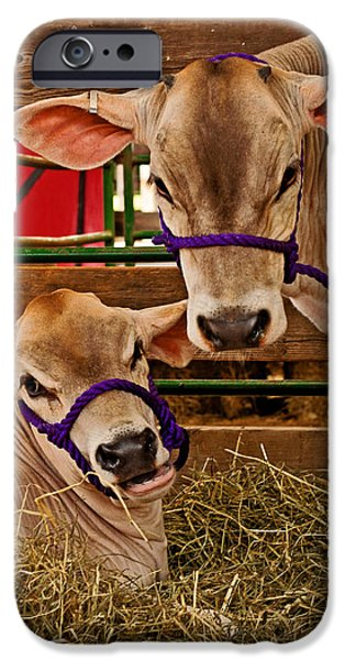 Swiss Horn iPhone Cases - Heres looking at you iPhone Case by Michael Porchik