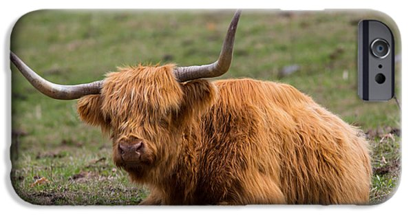Concord Massachusetts iPhone Cases - Highland Cattle Bull iPhone Case by Allan Morrison