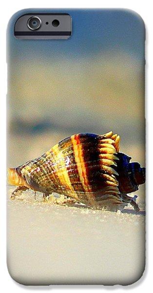 Hermit Crab  iPhone Case by Debra Forand
