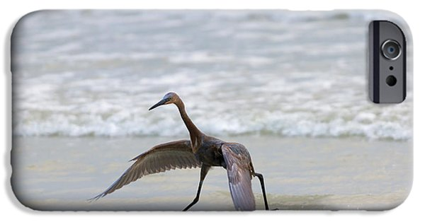 Florida Wildlife iPhone Cases - Heron Ballet iPhone Case by Mike  Dawson