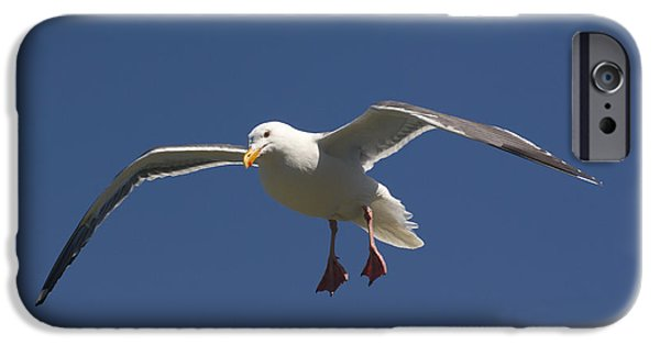 Sea Birds iPhone Cases - Herring Gull iPhone Case by John Shaw