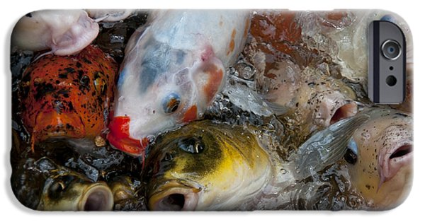 Butterfly Koi iPhone Cases - Hey Whats Happening iPhone Case by Wilma  Birdwell