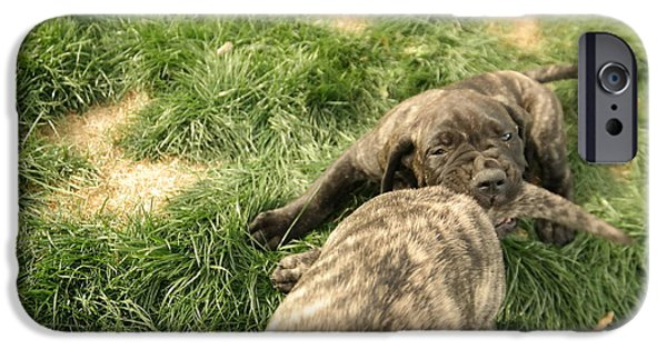 English Mastiff iPhone Cases - Hey You Come Back Here Buddy iPhone Case by Jeff  Swan