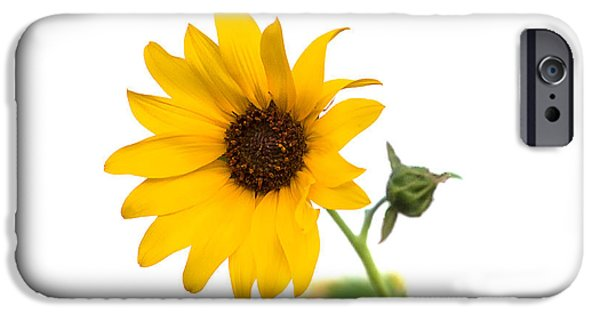 Temecula iPhone Cases - Hi Key Sunflower iPhone Case by Peter Tellone