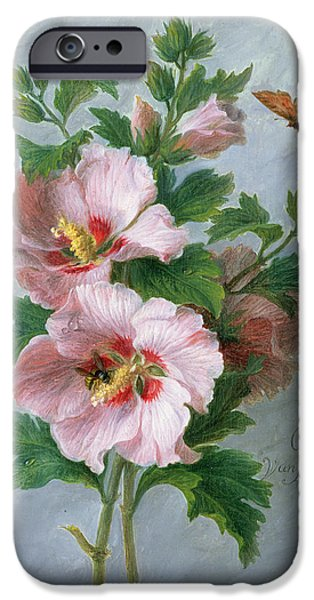 Floral Photographs iPhone Cases - Hibiscus Against A Marble Ledge Oil On Panel iPhone Case by Cornelis van Spaendonck