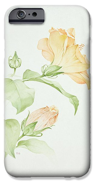Botanical Photographs iPhone Cases - Hibiscus Rosa-sinensis iPhone Case by Sarah Creswell