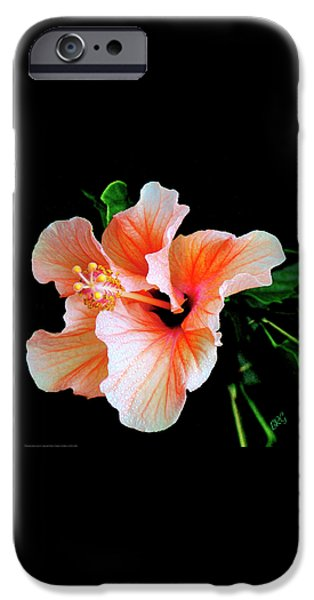 Brg iPhone Cases - Hibiscus Spectacular iPhone Case by Ben and Raisa Gertsberg