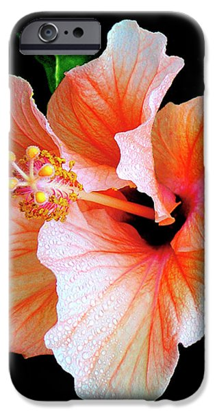 Hibiscus iPhone Cases - Hibiscus Spectacular iPhone Case by Ben and Raisa Gertsberg