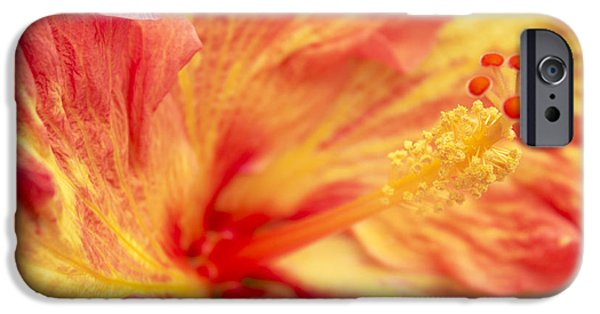 Hibiscus iPhone Cases - Hibiscus iPhone Case by Tony Cordoza