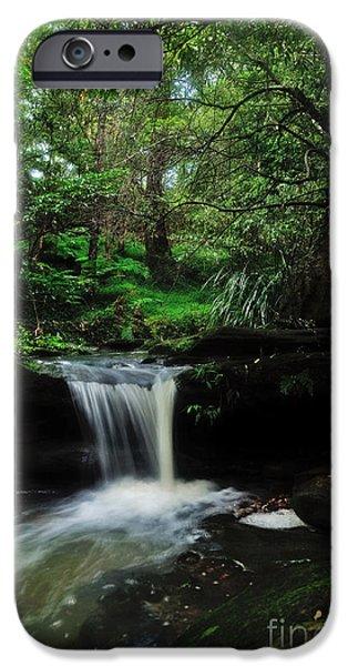 Hidden Rainforest iPhone Case by Kaye Menner