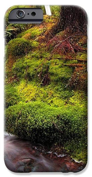 Hidden Woodland Corner. Benmore Botanical Garden. Scotland iPhone Case by Jenny Rainbow