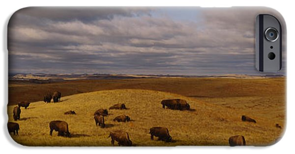American Bison iPhone Cases - High Angle View Of Buffaloes Grazing iPhone Case by Panoramic Images