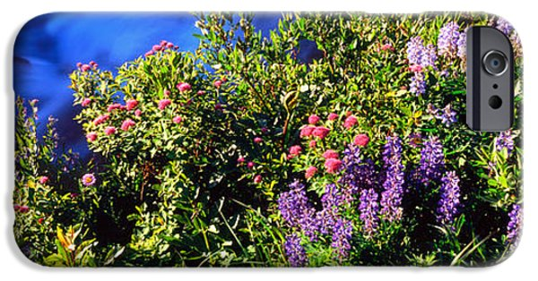 Spirea iPhone Cases - High Angle View Of Lupine And Spirea iPhone Case by Panoramic Images