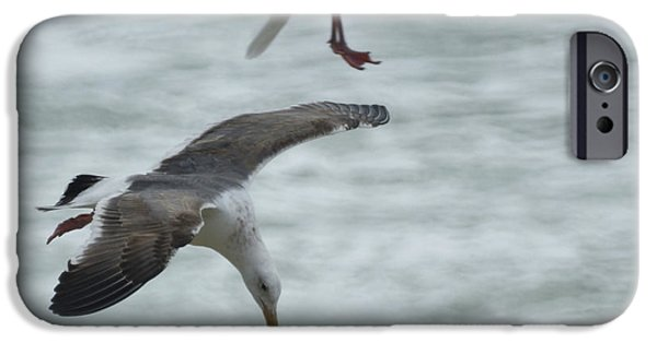 Seagull iPhone Cases - High Dive iPhone Case by Ernie Echols