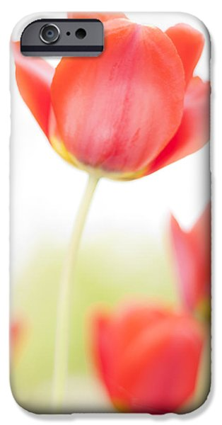 Close Up Floral iPhone Cases - High Key Tulips iPhone Case by Adam Romanowicz