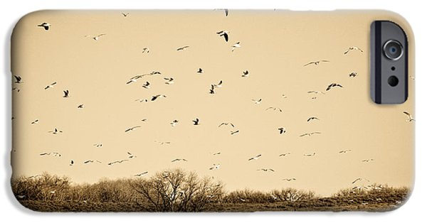 Flying Seagull iPhone Cases - High Plains Seagulls iPhone Case by Marilyn Hunt