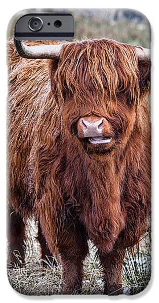 Snowy iPhone Cases - Highland Coo iPhone Case by John Farnan