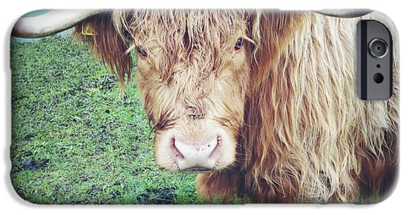 Agriculture iPhone Cases - Highland cow iPhone Case by Les Cunliffe