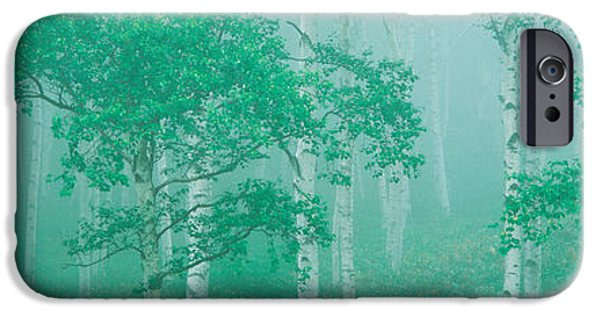 Green Foliage iPhone Cases - Highlands Yachihokgen Nagano Japan iPhone Case by Panoramic Images