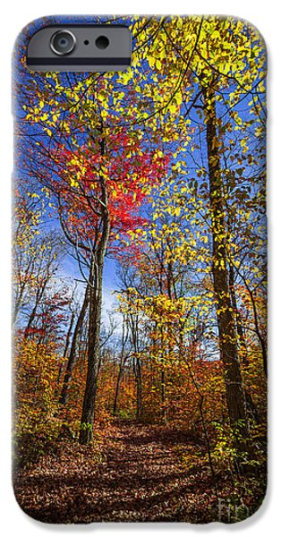 Forest iPhone Cases - Hiking trail in fall forest iPhone Case by Elena Elisseeva