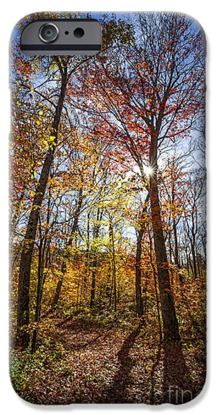 Fallen Leaf iPhone Cases - Hiking trail in sunny fall forest iPhone Case by Elena Elisseeva