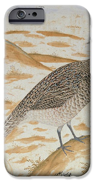 Gamebird iPhone Cases - Himalayan Cheer Pheasant, Jahangir Period, Mughal, C.1620 Watercolour iPhone Case by Mansur