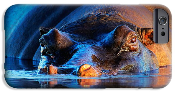 Shoulders iPhone Cases - Hippopotamus  at sunset iPhone Case by Johan Swanepoel