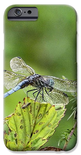 His Domain iPhone Case by JC Findley