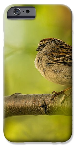 His Eye Is On The Sparrow iPhone Case by Lois Bryan