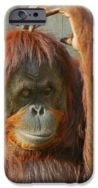 Orangutan Digital Art iPhone Cases - Hmmm - Let Me Think About That iPhone Case by Emmy Marie Vickers