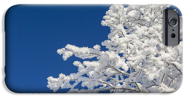 Willow Lake iPhone Cases - Hoar Frost and Clear Skies iPhone Case by Tim Grams