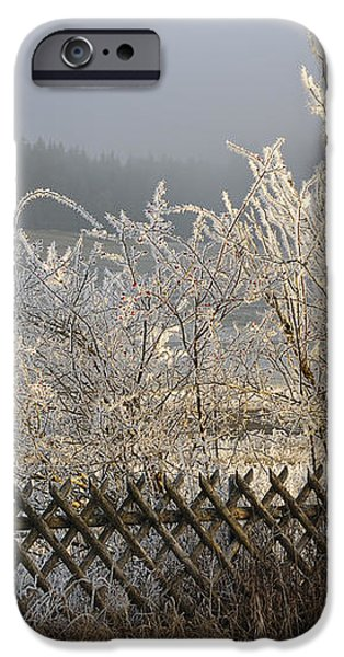Hoarfrost in winter iPhone Case by Matthias Hauser