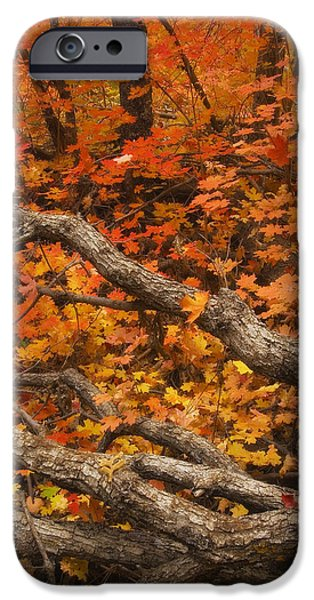 Oak Creek Canyon iPhone Cases - Holding Back iPhone Case by Peter Coskun