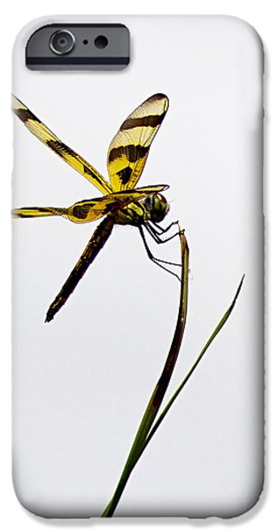 Holding On iPhone Case by Anne Rodkin