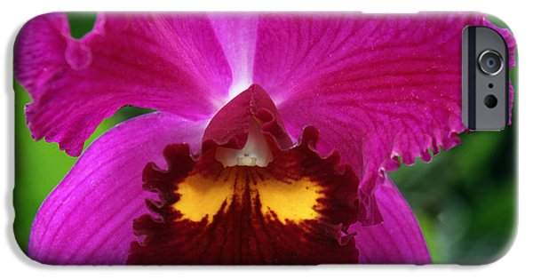 Dep iPhone Cases - HOLIDAY Orchid iPhone Case by William Dey