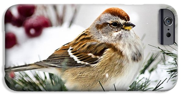 Birds iPhone Cases - Holiday Tree Sparrow Square iPhone Case by Christina Rollo