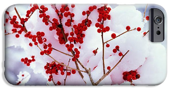 Berry iPhone Cases - Holly Trees Kyoto Keihoku-cho Japan iPhone Case by Panoramic Images
