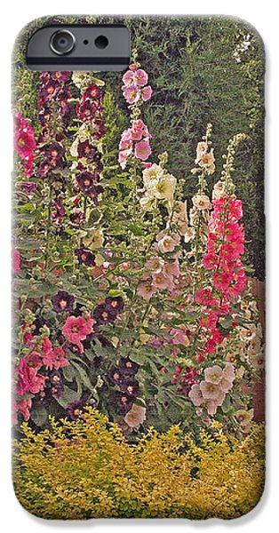 Hollyhocks iPhone Case by Kay Novy