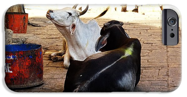 Holy Cow iPhone Cases - Holy Cows in Jaisalmer Fort Rajasthan India iPhone Case by Sue Jacobi