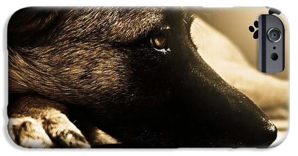 Loyality iPhone Cases - Home is Where The Dog Is iPhone Case by Clare Bevan