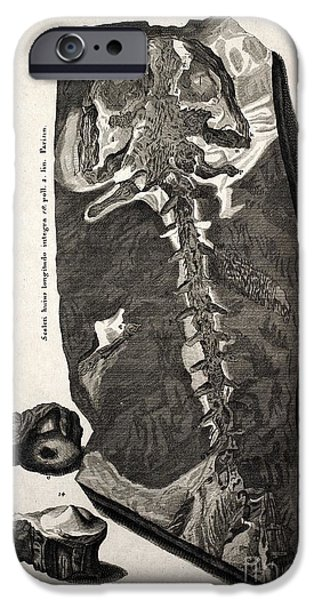 Creationism iPhone Cases - Homo Diluvii Testis, Scheuchzer, 1726 iPhone Case by Paul D. Stewart
