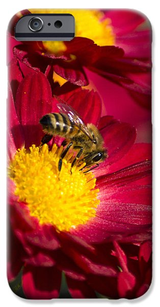 Honey Bee And Chrysanthemum iPhone Case by Christina Rollo