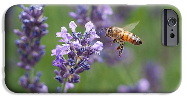 Purple iPhone Cases - Honey Bee and Lavender iPhone Case by Rona Black
