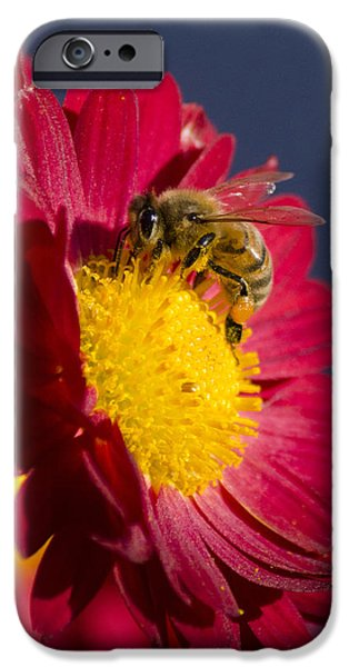 Honey Bee iPhone Case by Christina Rollo