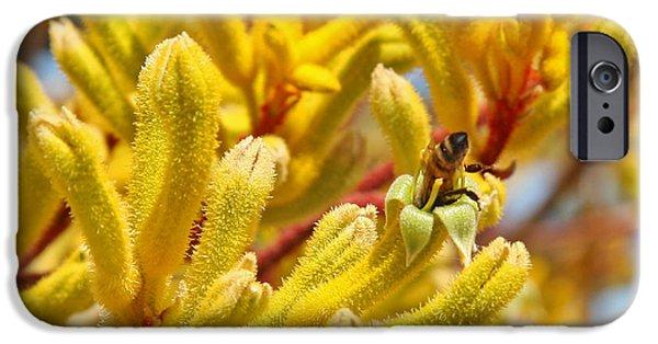 Kangaroo Digital Art iPhone Cases - Honey Bee in Kangaroo Paw Flower - Ill Take a Look iPhone Case by Kenny Bosak