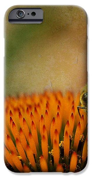 Honey bee on flower iPhone Case by Dan Friend