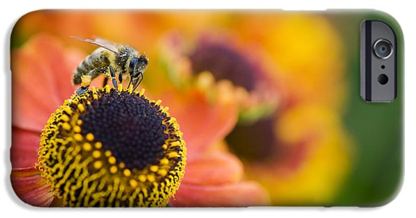 Anther iPhone Cases - Honey Bee on Helenium iPhone Case by Tim Gainey